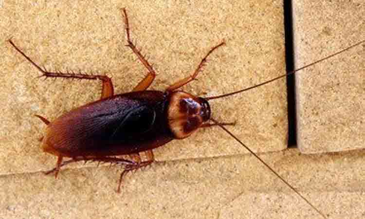 Cockroach services in Chennai