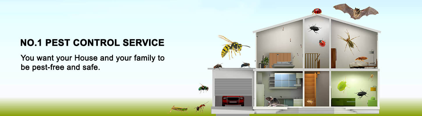 Pest control Service in Chennai